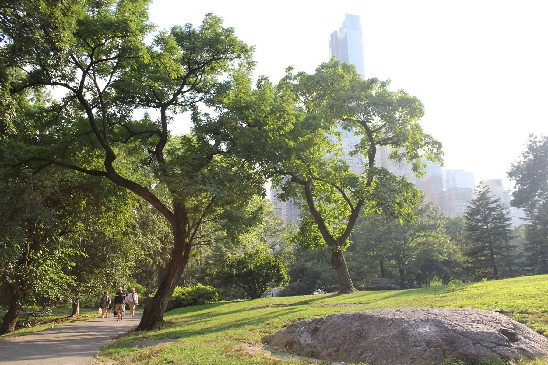 Afternoon sunlight streaming into Central Park