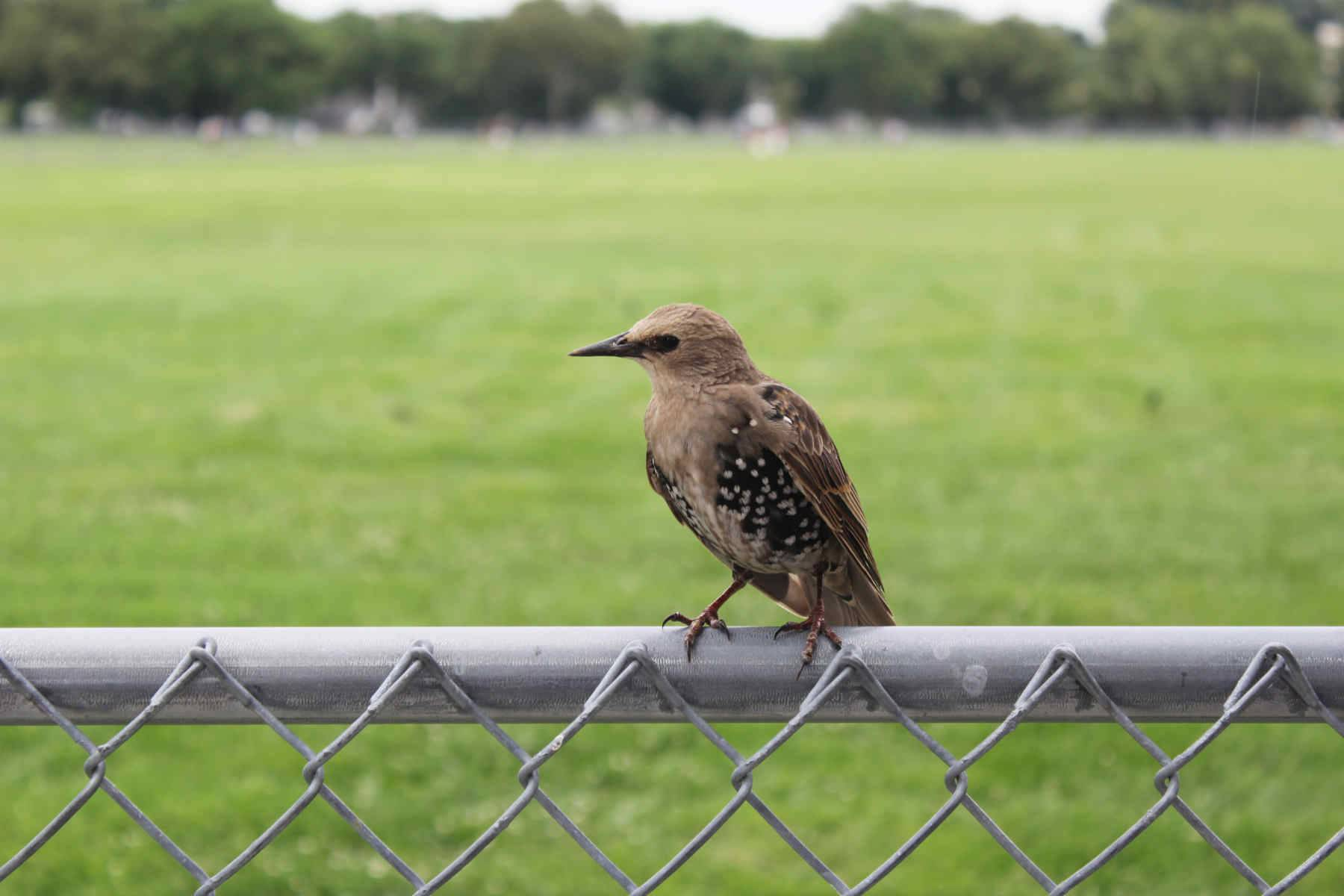 A bird sitting on the fence near the White House